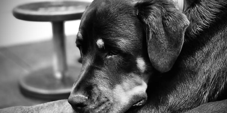 Bella Resting